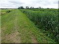TL2386 : Bank and reeds - Great Raveley Drain by Richard Humphrey