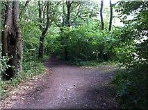 TQ1562 : Birchwood Lane by Hugh Craddock