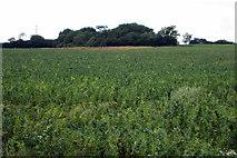 SP6929 : Brasses Spinney by Philip Jeffrey