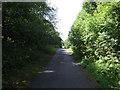 NZ2471 : Cycle track through Matts Bank Plantation by JThomas