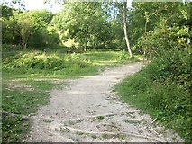 TQ1148 : Path up White Downs by michael