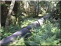 NO7497 : Exposed water pipeline by Stanley Howe