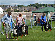 NT7233 : A dog show at Springwood Park, Kelso by Walter Baxter