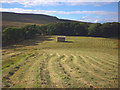 SD8388 : Cut grass crop, lower Widdale by Karl and Ali