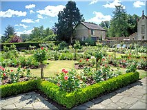 TL8564 : The Old English Rose Garden, Abbey Gardens by David Dixon