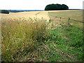 SU6514 : Footpath near Rushmere Farm by Chris Gunns