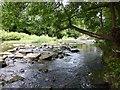 NZ1658 : River Derwent by Russel Wills