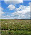 SE8292 : Blue Skies White Clouds Levisham Moor by Scott Robinson