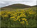 NO5377 : Hillside south of Glen Esk by William Starkey