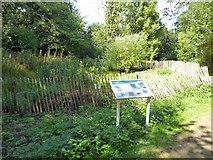 TQ2636 : Marshy pond, Goffs Park by Robin Webster