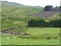 NO1664 : Deforestation near Balloch by Oliver Dixon
