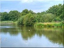 SJ8381 : Lindow Common, Black Lake by David Dixon