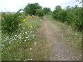 TQ7175 : Path along the edge of Higham Marshes by Marathon
