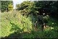 TL5258 : Little Wilbraham River by Enttauscht