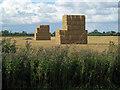 TA1122 : Stacked Bales at North End by David Wright
