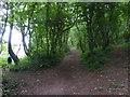 SM9301 : Coastal path and woods near Lambeeth by David Medcalf