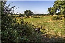 TQ3097 : Farmland, Trent Park, Enfield, Middlesex by Christine Matthews