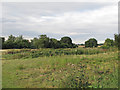 TL6625 : Field and paddocks near Blueitts Farm, Stebbing Bran End by Roger Jones