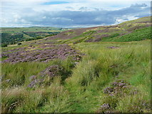 SE0511 : A wet section of the Colne valley Circular Walk by Humphrey Bolton