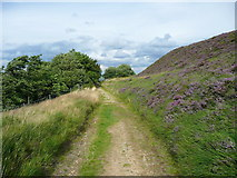 SE0511 : Footpath from Meltham Road to Round Hill by Humphrey Bolton