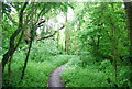 TQ3146 : Tandridge Border Path, Outwood Common by N Chadwick
