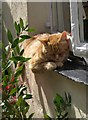 SS3124 : Cat, Clovelly by Derek Harper
