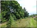 NO2703 : Strip of oak trees by James Allan