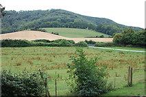 SU8518 : View from Bepton Churchyard by Trevor Harris
