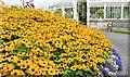 J3372 : Summer flowers, Botanic Gardens, Belfast (2013) by Albert Bridge