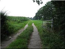 SJ3338 : Public footpath beside a field of sweetcorn by Maggie Cox