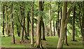 J4157 : Trees, Rowallane, Saintfield by Albert Bridge