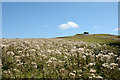 NY9253 : Thistle infested pasture by Trevor Littlewood