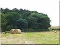NZ3803 : Field and wood near Plantema Farm by Oliver Dixon