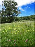 SE8493 : Hole of Horcum Meadows by Scott Robinson