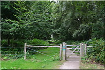 TQ2053 : Path into the woods at Headley Heath by David Martin