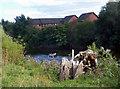SO5238 : Canoe & Stump by Des Blenkinsopp