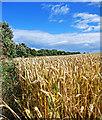 TA0585 : Cleveland Way Wheat Fields by Scott Robinson