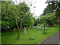 ST9917 : St Mary, Sixpenny Handley: churchyard (a) by Basher Eyre