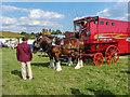 TL2901 : Shire Horses, Cuffley Steam and Heavy Horse Fair by Christine Matthews