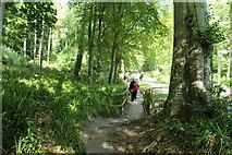 NS2209 : Culzean Country Park by Billy McCrorie