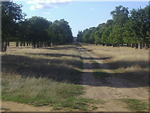 TQ1667 : Avenue looking towards Hampton Court Palace by David Howard