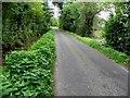 H3173 : Nettles along Drumscra Road by Kenneth  Allen