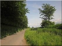 SS8928 : Road east of Scatterbrook Farm by Derek Harper