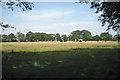SP1168 : Fields east of Kineton Coppice by Robin Stott