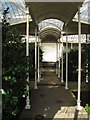 SK5339 : Camellia House, Wollaton Hall by David Hawgood