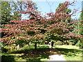 SZ0692 : Path through Upper Gardens by Paul Gillett