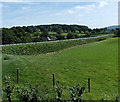 SO0253 : A470 embankment south of Builth Road, Powys by Jaggery
