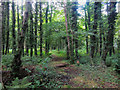 NU2419 : Footpath through woodland, near Craster Tower by Graham Robson