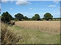 SU9549 : Rural scene, Surrey by Alan Hunt