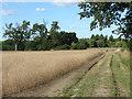 SU9548 : Footpath near the Hog's Back by Alan Hunt